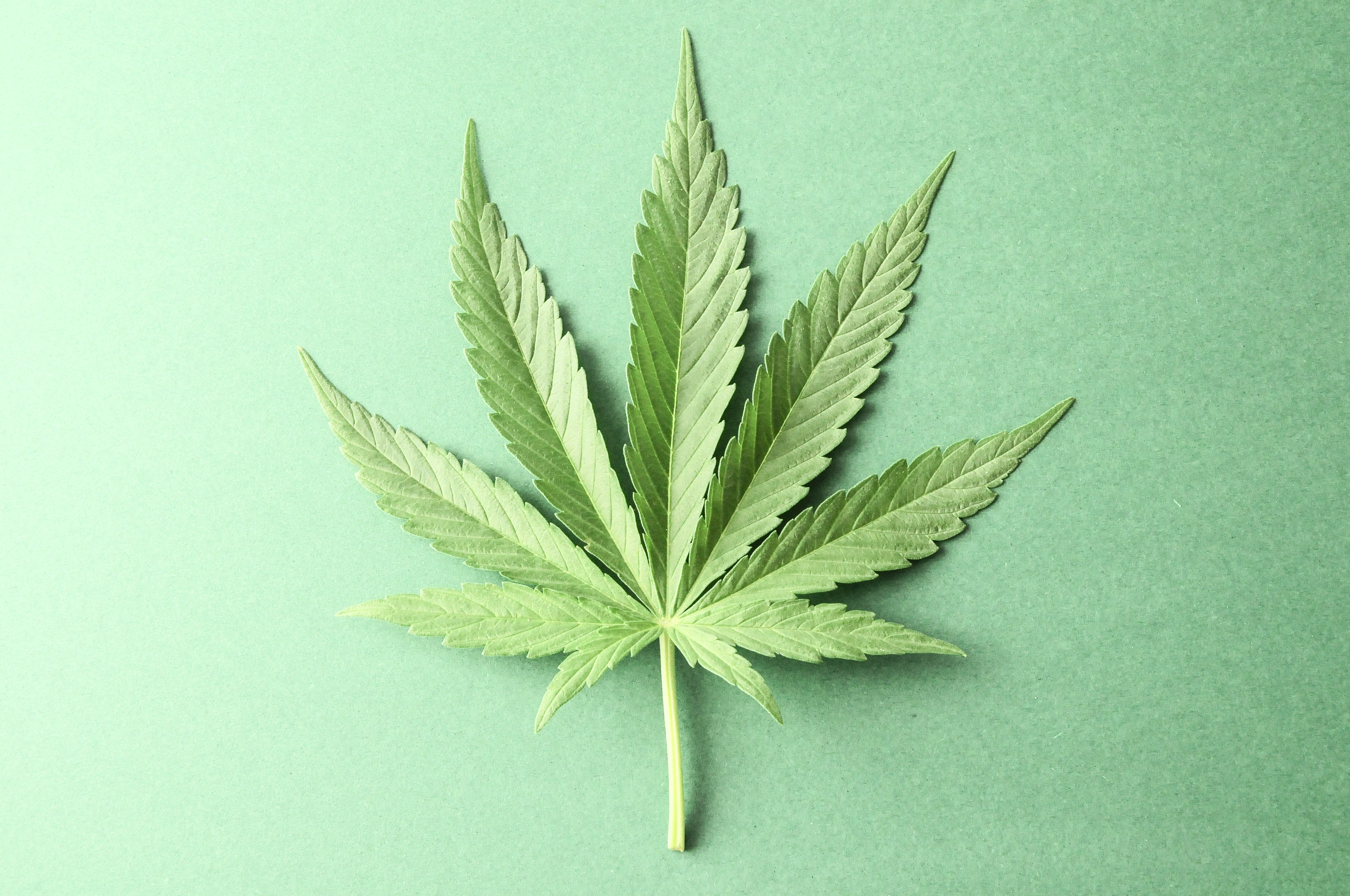 Leads For Weed Professional Web Development